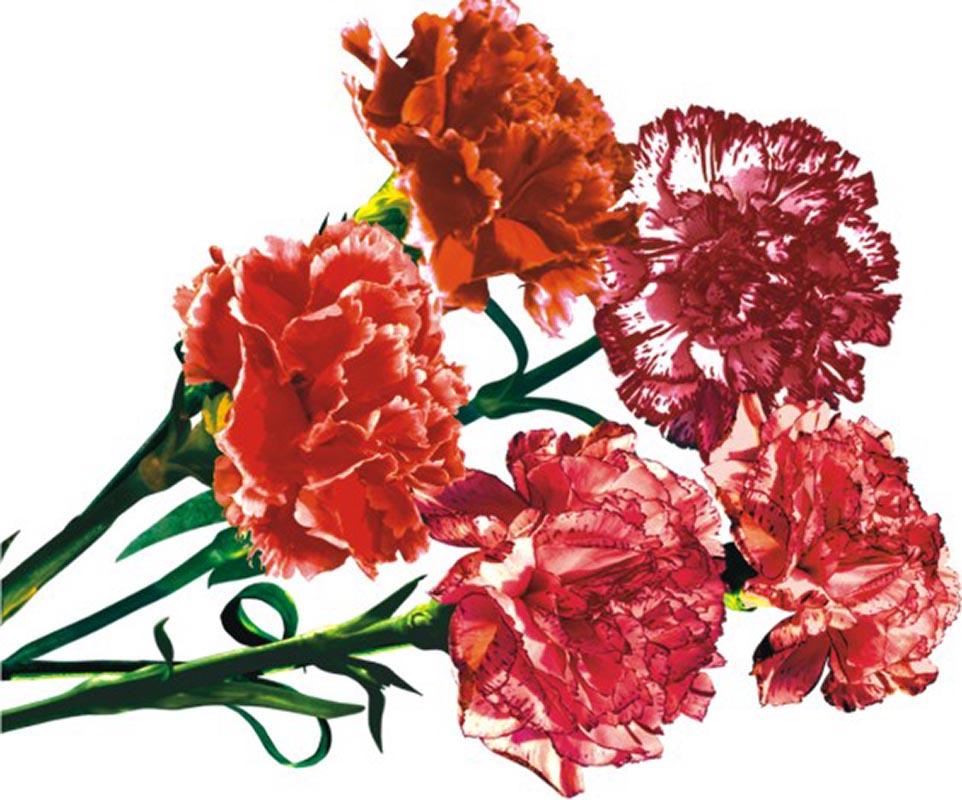 Фото цветов - Фото цветов