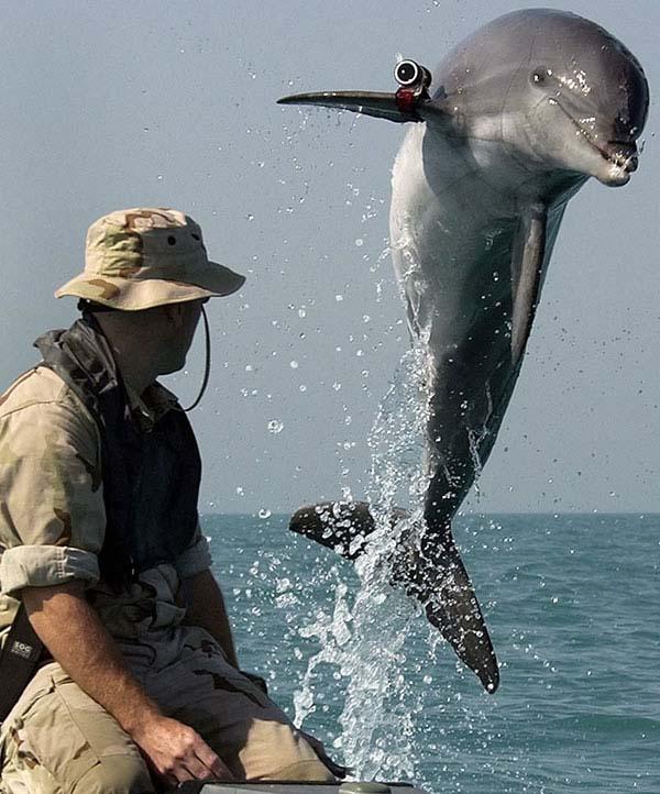 Дельфин-разведчик